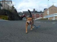 散歩20111023-1