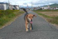 散歩20111023-3