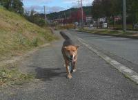 散歩20111023-5
