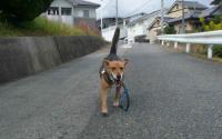 散歩20111024-2