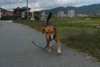 散歩20111024-3