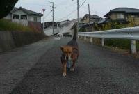散歩20111025-2