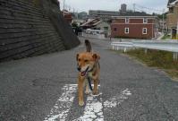 散歩20111025-3