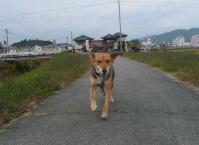 散歩20111025-4