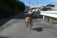 散歩20111026-1