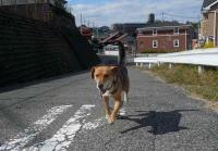 散歩20111026-2