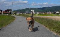 散歩20111026-4