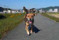 散歩20111027-2
