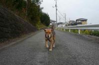 散歩20111028-2