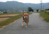 散歩20111028-3