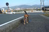 散歩20111029-2