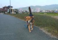 散歩20111029-3