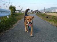 散歩20111029-4