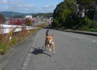 散歩20111031-1