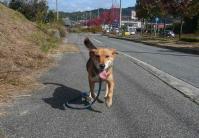 散歩20111031-5