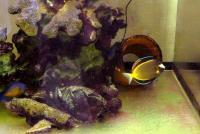 水槽20100909