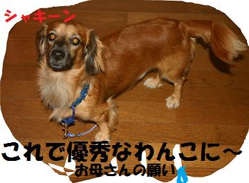 無題syaki^^^^nn