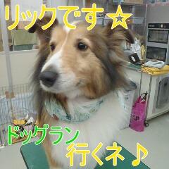 1_20110529163436.jpg