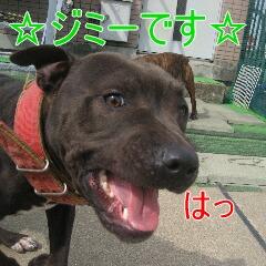 1_20110529164307.jpg