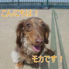 1_20110530185335.jpg