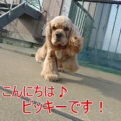1_20110530185555.jpg