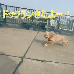 2_20110530185555.jpg