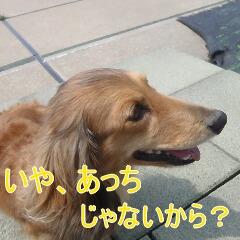 3_20110517182944.jpg