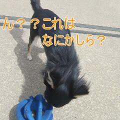 3_20110517183146.jpg