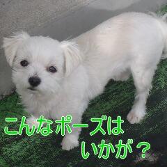 3_20110523184628.jpg