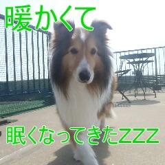 3_20110529163434.jpg