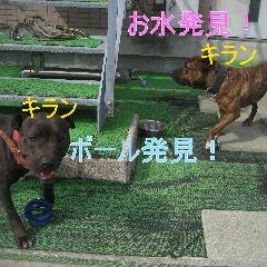 3_20110529164306.jpg