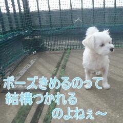 4_20110523184627.jpg
