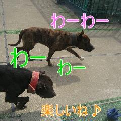 4_20110529164306.jpg