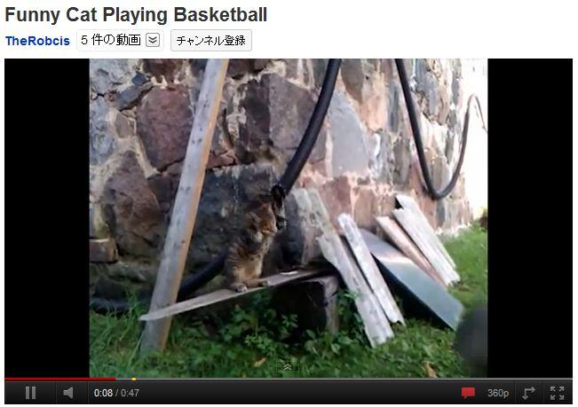 バスケットボール猫