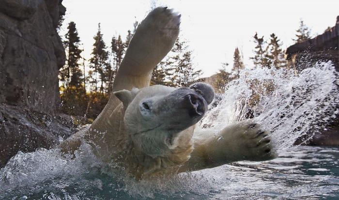 ハイテンション熊