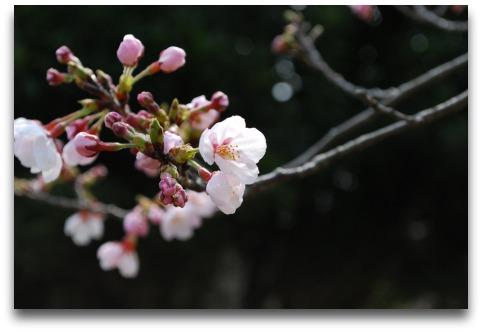2011-3月 淡路花見 102