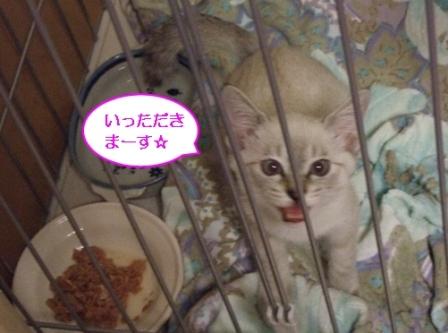 2010_0911は~ちゃん0020
