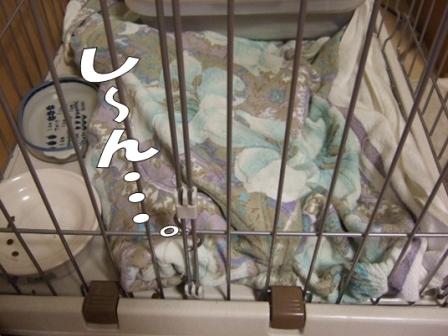 2010_0911は~ちゃん0005
