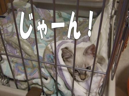 2010_0911は~ちゃん0008