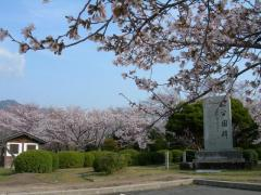 2011sakura06.jpg