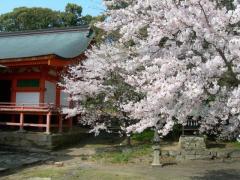 2011sakura12.jpg