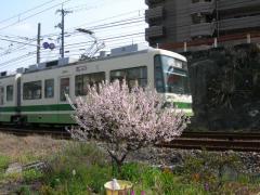 2011sakura13.jpg