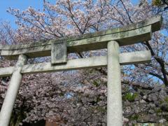 2011sakura6.jpg