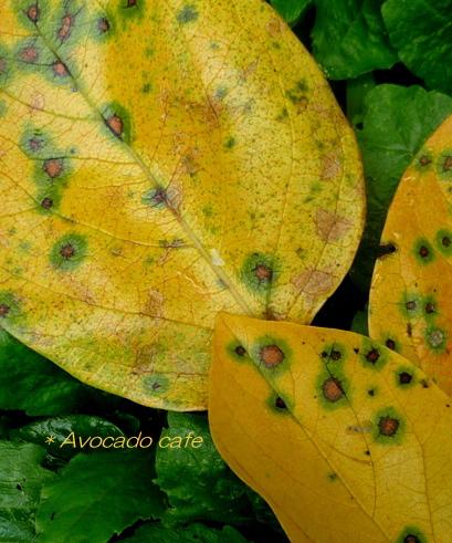秋色柿の葉