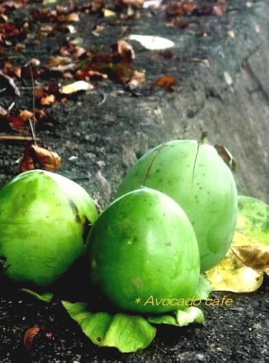 落ちた柿の実