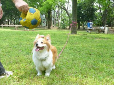 201106芦花ボール投げて.JPG 400