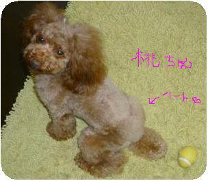 201106桃ちゃん角♡付き