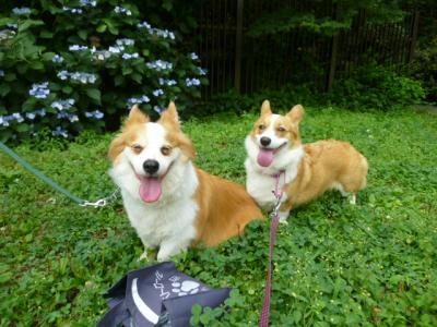 20110709芦花今日の笑顔