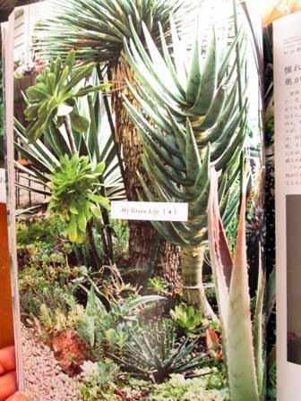 植物男子2