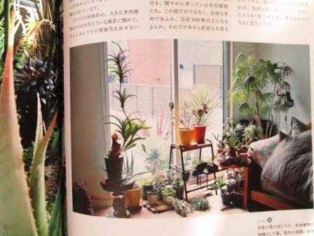 植物男子3